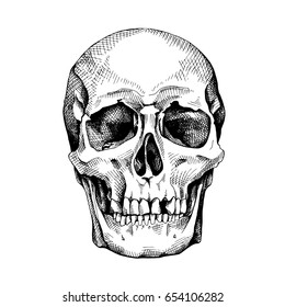 Frontal image of the skull. Vector illustration.
