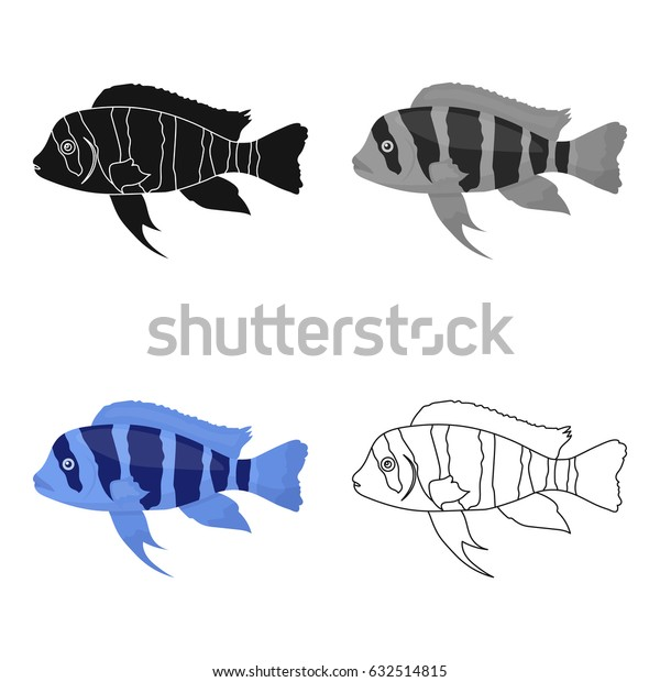 Frontosa Cichlid (Cyphotilapia Frontosa) fish icon cartoon. Singe aquarium fish icon from the sea,ocean life cartoon.