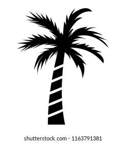 Fruit bearing coconut tree