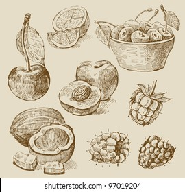 fruit - illustration