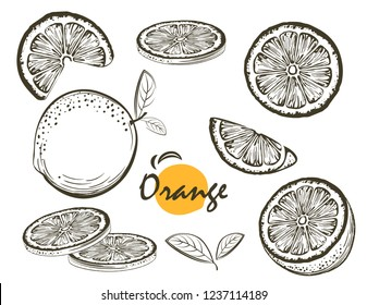 Fruit illustration with Orange in the style of engraving. Collection vector of illustrations. Elements for menu, greeting cards, wrapping paper, cosmetics packaging, labels, tags, posters etc