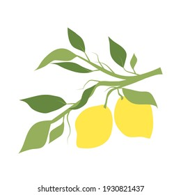 Fruit lemon branch, illustration isolated on white background. Kitchen design decoration, food packaging, flat food illustration, vector fruit tree. Hand drawn citrus hanging on branch with leaves