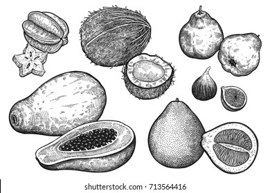 Fruit and nuts isolated on white background set. Realistic vector illustration of fig, pomelo, papaya, coconut, apple quince, carambola. Vintage black and white hand drawing. Vegetarian food.