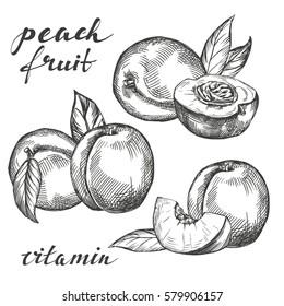 fruit peach set hand drawn vector illustration realistic sketch