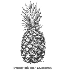 fruit pineapple hand drawn vector illustration realistic sketch