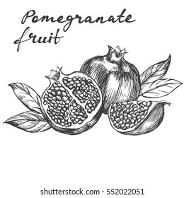 fruit pomegranate  set hand drawn vector illustration realistic sketch