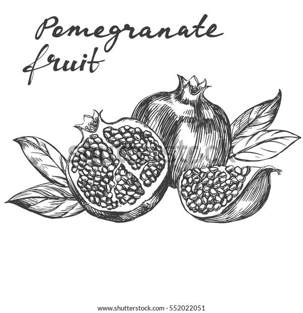 Obstpomegranat-Set handgezeichnet Vektorgrafik realistische Skizze