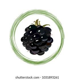 Fruit of ripe blackberry