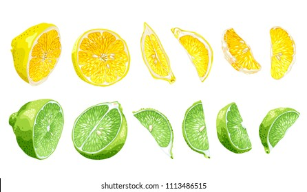Fruit set with lime and lemon in halves and slices in different parts in realistic vector graphic illustration in bright colors