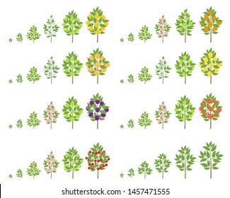 Fruit tree growth stages set. Apple, peach and lemon mandarin. Vector illustration. Ripening progression. Fruit trees life cycle animation plant harvest.