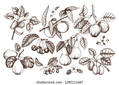 Fruit trees branches set. Hand drawn botanical elements - flowers, leaves. Cherry, plum, peach, apple, apricot, quince and pear illustrations. Vintage plants collection.
