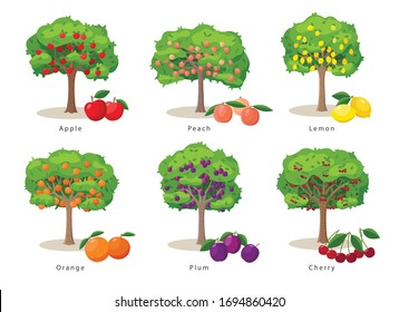 Fruit trees set of illustrations in flat cartoon gesign isolated on white background, fruit trees farm icons concept, vector infographic elements.