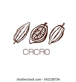 The fruits of cocoa beans. Set. Hand drawn. Label. Logo. Vector illustration.