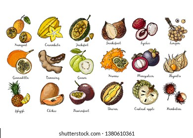 Fruits drawn by a line on a white back. Salak, Lychee, longan, Kiwano, Mangosteen, Physalis, Rambutan, Kumquat, Carambola, Jackfruit, Granadilla, Passionfruit, Guava, Tamaring, Pineapple, Durian.