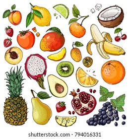 Fruits drawn by a line on a white background. Vector colored food sketch. Pineapple, grapes, pear, apple, orange, coconut, mango, mandarin, peach, kiwi, banana, lemon