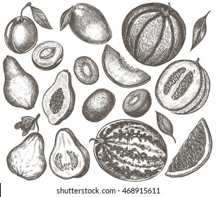 Fruits engraved hand drawn vector illustrations. Isolated on white background. Ink line art elements for menu design, label, recipe, cook book. Vintage style, detailed drawings.