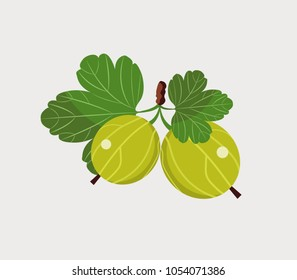 Fruits of gooseberry, garden plant, flat design. Vector illustration.