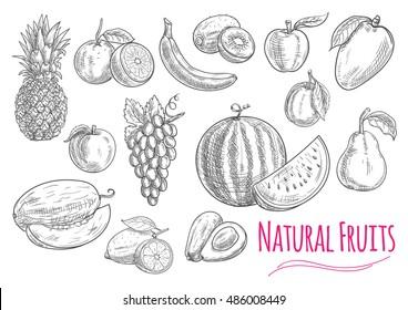 Fruits isolated sketches with sweet orange, banana, apple, lemon, grape, peach, plum, pineapple, mango, watermelon, avocado, melon and pear fruits. Food design