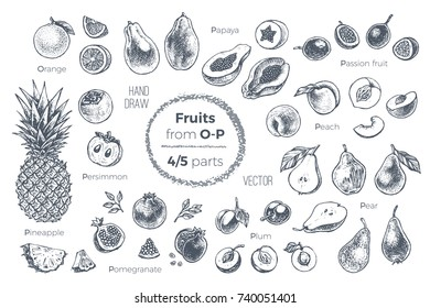 Fruits set. Hand drawn vector. Sketches of tropical fruits from O to P for design of juice packages & smoothie recipes. 4 of 5 parts