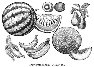 Fruits set. Realistic vector illustration of watermelon, melon, kiwi, pear, bananas, cantaloupe. Vintage black and white hand drawing. Vegetarian food. Kitchen design. Decoration for food packaging.