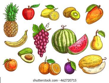 Fruits set. Sketch hand drawn vector tropical and exotic fruits. Color drawings of pineapple, banana, apple, avocado, peach, red grape, lemon, orange, watermelon, kiwi, plum, mango pear melon