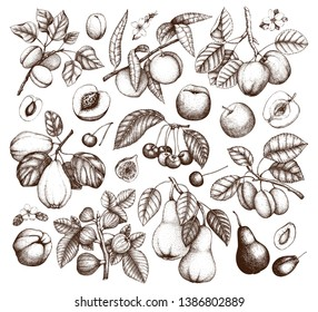 Fruits and trees branches set. Cherry, plum, peach, apple, peach, apricot, fig, quince, pear sketches. With flowers and  fruits. Vector plants outlines. Hand drawn botanical illustration.