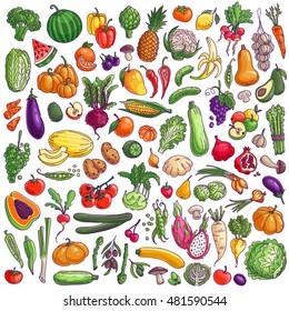 Fruits and vegetables. Colorful vector freehand illustration isolated on white background.