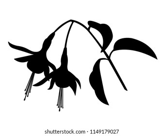 Fuchsia Flower Silhouette, Black and White Vector Illustration