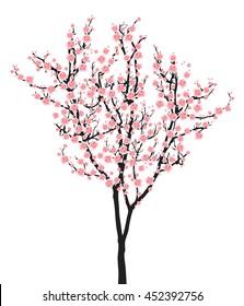 Full bloom pink sakura tree (Cherry blossom) black wood isolated on white, flower branch backdrop, flora bush banner vintage frame. Pastel sweet spring floral wallpaper.