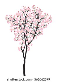 Full bloom pink sakura tree (Cherry blossom) black wood isolated on white, flower branch backdrop, flora bush banner vintage frame. Pastel sweet spring floral wallpaper.