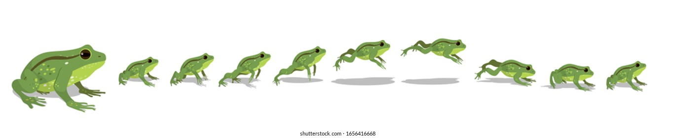 Full cycle animation of the jump of a frog or toad. Sequences or footage for motion design.