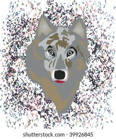 Full face portrait of wolf with random multi-color splash background.