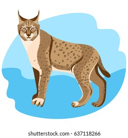 Full length spotted bobcat vector illustration isolated on blue background.