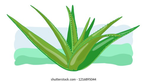 Full size Aloe vera medicinal eco plant, healthy and natural beauty and health product. Horizontal and decorative vector illustration poster. Fresh and green herbal element.