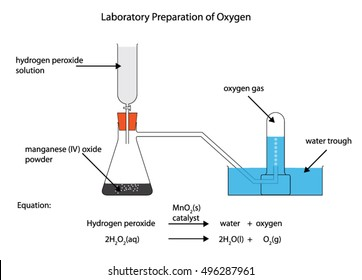 Fully labelled diagram of the laboratory preparation of oxygen from hydrogen peroxide with manganese (IV) oxide catalyst