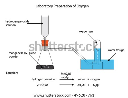 fully labelled diagram laboratory preparation oxygen stock vector IA Diagram fully labelled diagram of the laboratory preparation of oxygen from hydrogen peroxide with manganese iv
