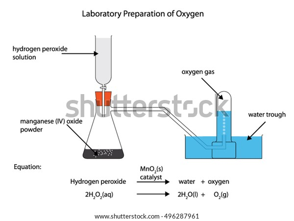 Fully Labelled Diagram Laboratory Preparation Oxygen Stock Vector