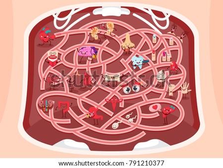 Fun Educational Human Anatomy Theme Maze Stock Vector Royalty Free