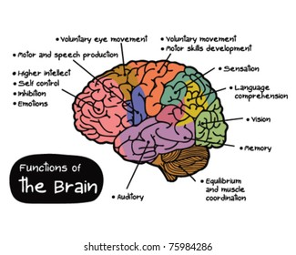 Function of Brain