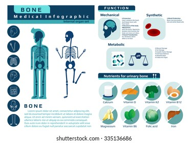 function and nutrition supplement of bone, medical health infographic, vector illustration for education.