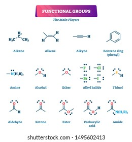 Functional groups vector illustration. Chemical formula reaction explanation model list. Educational chain organic chemistry syntheses with substituents or moieties as characteristic molecules example