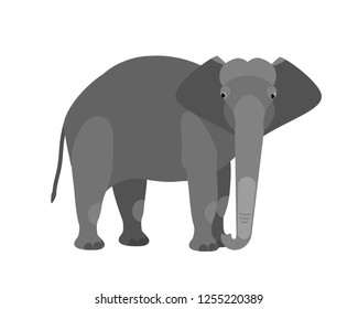Funny adorable cute elephant isolated on white background. Large wild smart African and Asian herbivorous mammal animal. Fauna of savannah. Colorful vector illustration in flat cartoon style.
