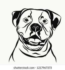 Funny american bulldog portrait
