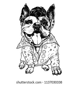 Funny american bully dog with Elvis costume. Vector illustration