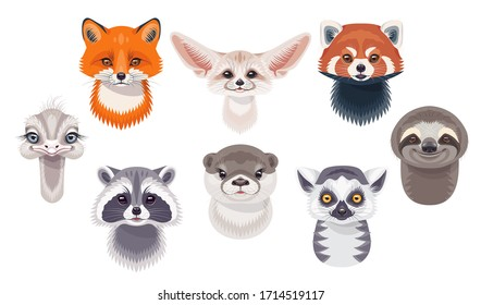 Funny animal faces or heads isolated on white background. Wild animals set. Cartoon cute sloth, red fox, fennec, lemur, red panda, otter, ostrich and raccoon vector flat illustration.