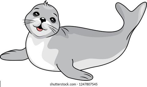 Funny baby seal. Vector