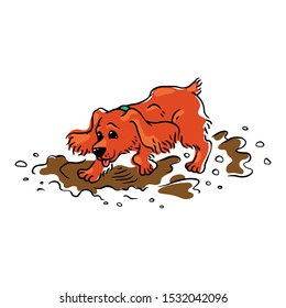 Funny brown spaniel dog runs and jumps through the mud and puddles. Spaniel dog pet behavior. Isolated vector hand drawing illustration of an animal.