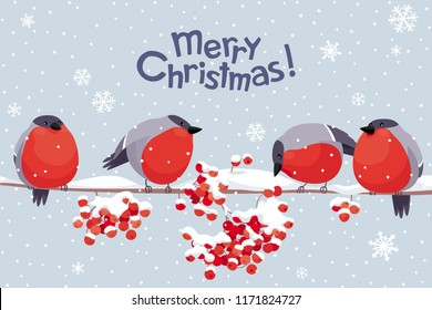 Funny Bullfinches and Rowan tree under the snowfall. Vector Christmas greeting card. For Christmas decoration, posters, banners, sales and other winter events.