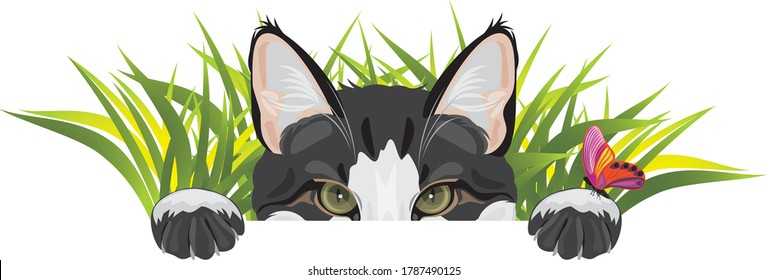 Funny cat looks out of the grass and plays with butterfly. Vector
