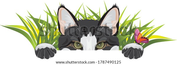 funny-cat-looks-out-grass-600w-178749012